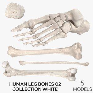 Human Leg Bones 02 Collection White - 5 models 3D model