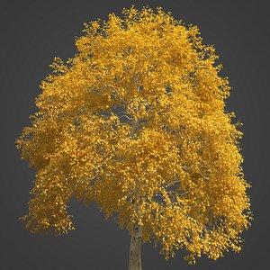 3D model 2021 PBR American Beech Collection - Fagus Grandifolia