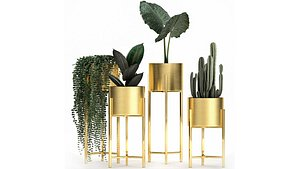 Houseplants in a gold pot for the interior 907 3D model