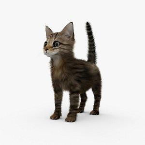 Kitten HD 3D