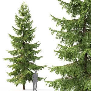3D spruce tree nature