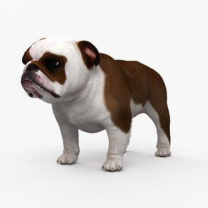 bulldog english dog 3D