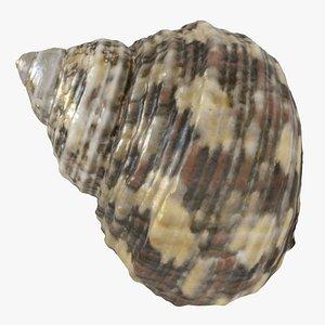 sea shell seashell model