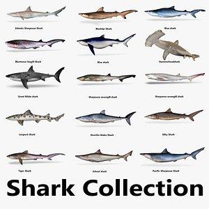 3D Shark Collection model