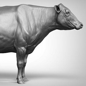 3D Cow dairy Zbrush model