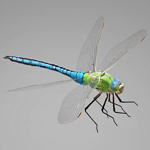 3D model Anax Imperator