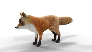 3D model Hair Fur Red Fox 02