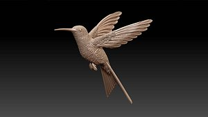 colibri humming bird model