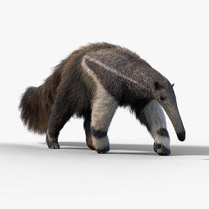 anteater animal mammal 3D model