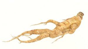 ginseng root 3D model