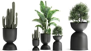Houseplants in a black pot for the interior 915 3D model