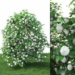 3D model viburnum rose guelder