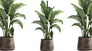 3D model Houseplants in a black pot for the interior 916