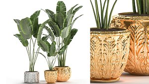 3D Houseplants in a gold pot for the interior 1005