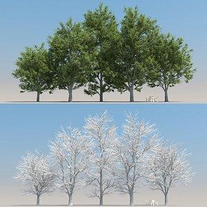 summer ash tree 3D model