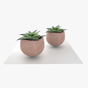3D Greasy plant LOW AND HIGH Poly model