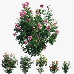 Rose plant set 66 3D model