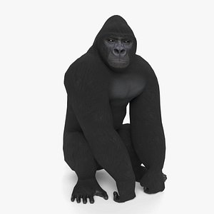 gorilla animal primate 3D model