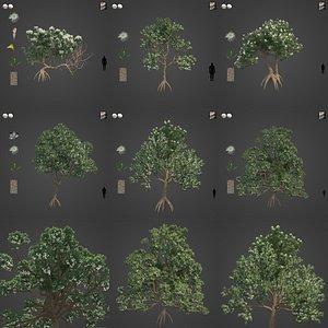 3D 2021 PBR Marri Collection - Corymbia Calophylla model