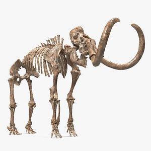 3D Mammoth Skeleton Old Bones