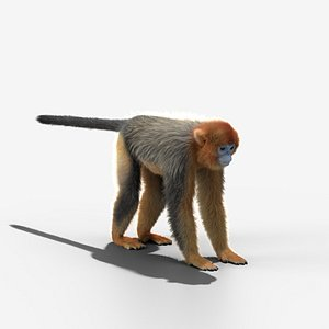 3D rhinopithecus roxellana animation