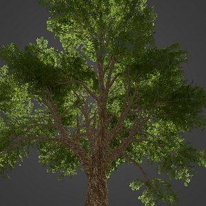 3D 2021 PBR Amur Corktree Collection - Phellodendron Amurense Japonica model