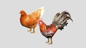 chicken cock model