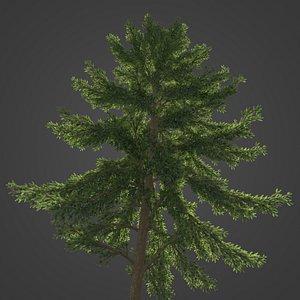 2021 PBR Koyama Spruce Collection - Picea Koyamai 3D model