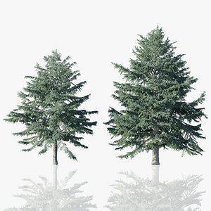 Deodar Cedar Trees model