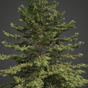 3D tree nature conifer