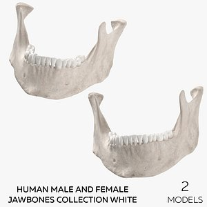 Human Male and Female Jawbones Collection White - 2 models 3D