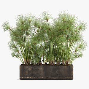 3D model Cyperus papyrus in a rust pot for the interior 1049