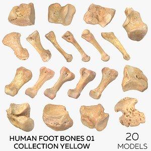3D Human Foot Bones 01 Collection Yellow - 20 models
