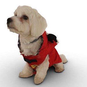 dog red dress model