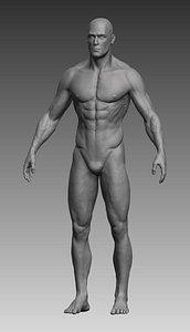 anatomical body man 3D model
