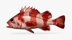 redbanded rockfish 3D model