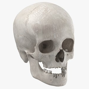 real human female skull 3D model