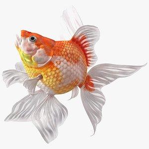 3D White Goldfish Aquarium Fish Swim