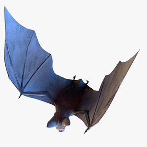 Realistic Bat LowPoly Rigged Animated 3D model