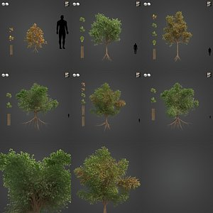 2021 PBR Downy Oak Collection - Quercus Pubescens 3D model