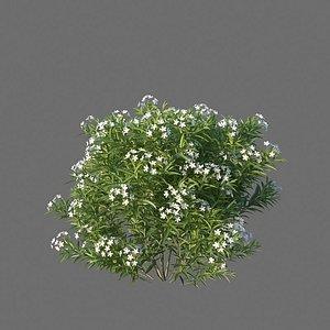 XfrogPlants Nerium Oleander