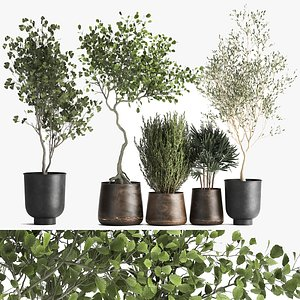 3D Houseplants in a flowerpot for the interior 1030