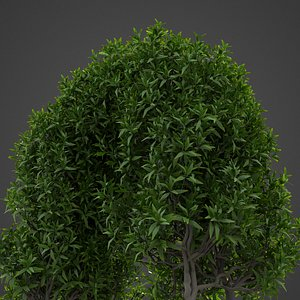nature plants foliage 3D model