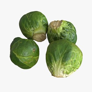 3D brussels sprout model