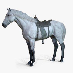 Horses - Stallions 3D