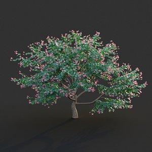 3D model XfrogPlants Hong Kong Orchid Tree - Bauhinia Blakeana