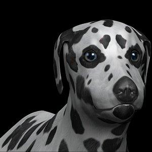 fully rigged dalmatian 3D model