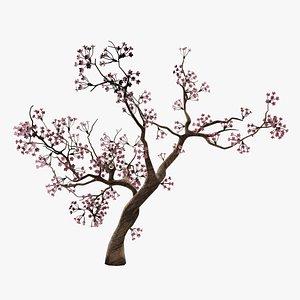 Sakura  Cherry Blossom Tree 3D model