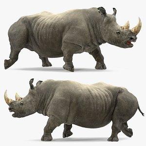 3D rhino adult walking pose