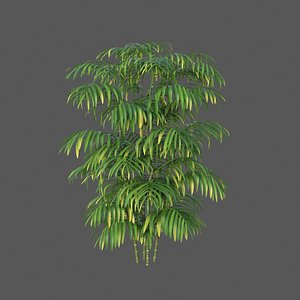 XfrogPlants Butterfly Palm - Dypsis Lutescens 3D